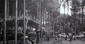 German aircraft hidden in the trees at satellite airfields, in this case Fw 190s.
