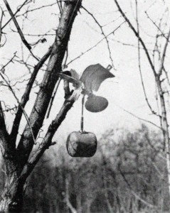 "A German cluster bomb of the type, Sprengbombe Dickwandig 2 kg (SD2), hung up in a tree, showing its unique ""Butterfly Bomb"" shape."
