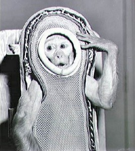 "The rhesus monkey named ""Sam"", seen encased in a model of the Mercury fiberglass contour couch during the work up for the Little Joe 2 launch in 1959.  Photo Credit:  NASA"